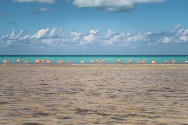 Flamants rose sur une plage à Holbox, Méxique
