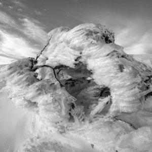 Buisson glacé par les éléments à Hotham, Australie